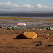Wait Of Water by John Greer, Bay of Fundy, 2014